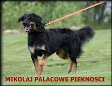 04c_Mikolaj
