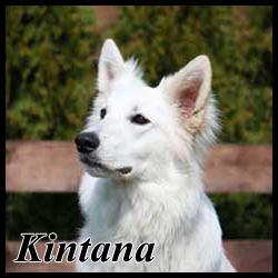 Kintana